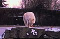 14 Berlin-Klassenfahrt 1979- Zoo (17977031658).jpg