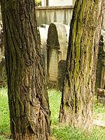 1734 cmentarz żydowski Ostrowiec Świętokrzyski 1.JPG
