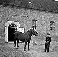 1958 visite d'une délégation INRA au Haras du Pin Cliché Jean Joseph Weber-57.jpg