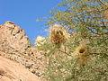 2008-06-28 09-56-58 Namibia Erongo Nainais.JPG