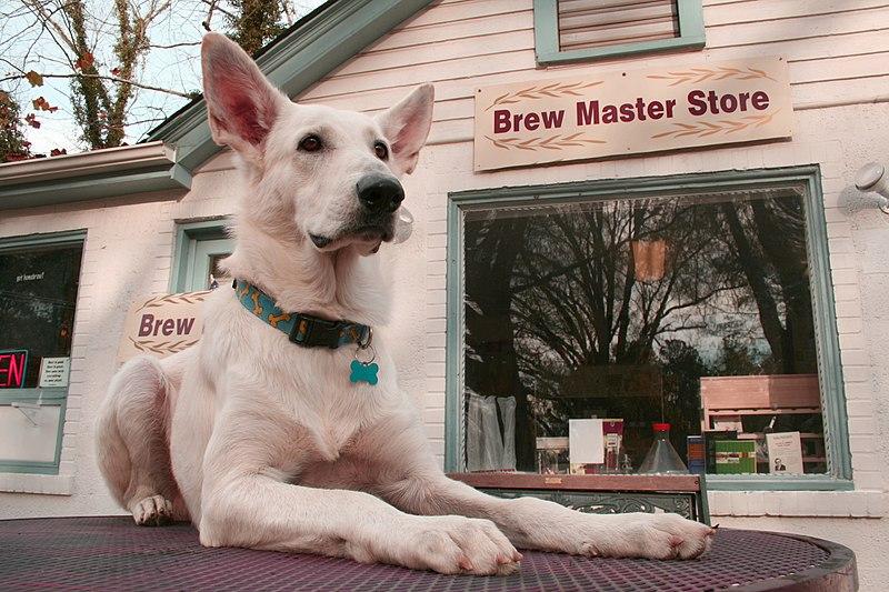 File:2008-11-22 Brew Master Dog.jpg