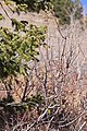 2009.11.07 12.04.32 IMG 4765 - Flickr - andrey zharkikh.jpg