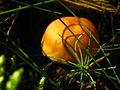 2010-09-07-pilze-by-RalfR-45.jpg