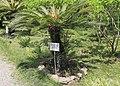 2014 Suchum, Ogród botaniczny (46).jpg