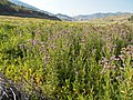 2015.08.17 17.59.53 DSCN2852 - Flickr - andrey zharkikh.jpg