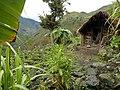 20170904 Papouasie Baliem valley 10.jpg