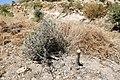 201805 defenseless against settlers violence photoblog hiyam sabah trees urif3.jpg