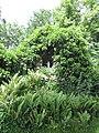 2020-06-02 — Lourdesgrot Heeckeren (Goor) - 3.jpg