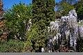 21-101-5003 Ужгородський сад.jpg