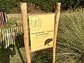 2189 Varkens Pigs Waterskiplas Westpark.DeHeld.RoegeBos.Gravenburg Vinkhuizen.jpg