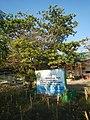 387Lubao, Pampanga landmarks schools churches 45.jpg