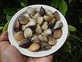 4022Common houseflies cats ants plants foods of Bulacan 62.jpg