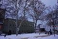 51-101-5037 «Платан західний», м. Одеса, сквер Оперного театру.jpg