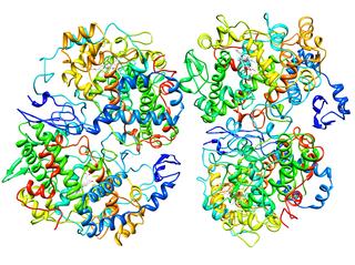 Prostaglandin-endoperoxide synthase 2
