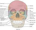 704 Skull-01.jpg