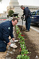 AOC Grounds crew plants flowers on Capitol Hill (8443868953).jpg