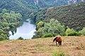 AS-Meandros del río Nora 11.jpg