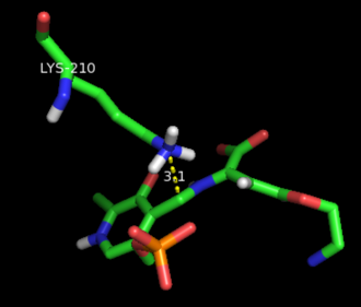 Cystathionine beta-lyase - AVG bounded to catalytic PLP in the substrate binding site of E. coli CBL. PDB entry: 1CL2