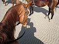 A fantastic day horseback riding north of Port Douglas on Wonga Beach (2672008614).jpg