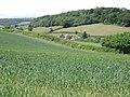 A field of wheat beside Oak Hill, Dawlish - geograph.org.uk - 1353204.jpg