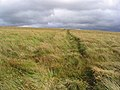 A grass track on Sole Hill - geograph.org.uk - 556645.jpg