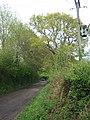 A minor road near Exmouth - geograph.org.uk - 1881437.jpg