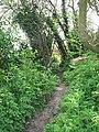 A narrow path - geograph.org.uk - 1253909.jpg