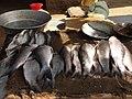 A scene of Hokenakal fish 3.JPG