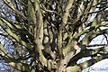 A tangle of branches - geograph.org.uk - 673960.jpg