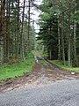 A track to Blelack - geograph.org.uk - 473678.jpg