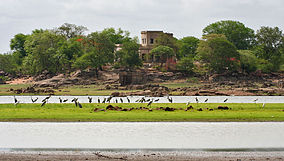 A view from Pocharam Lake with Herons, Egrets, Openbills etc W IMG 9727.jpg