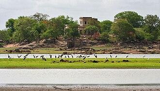 Pocharam lake - A view from Pocharam Lake with Herons, Egrets, Openbills