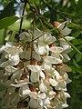 Ab plant 2002.jpg