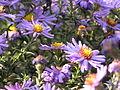 Ab plant 2276.jpg