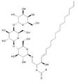 Acción enzimática de alfa-galactosidasa en globotriaosilceramida.png