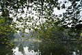 Acharya Jagadish Chandra Bose Indian Botanic Garden - Howrah 2011-01-08 9860.JPG