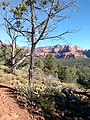 Aerie Trail, Sedona, Arizona - panoramio (2).jpg