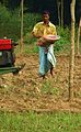 Agriculture in Bangladesh 1.JPG