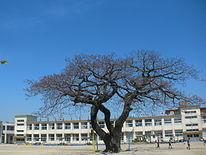 Aira Kensho Elementary school.JPG
