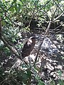 Albay Park & Wildlife 1.jpg