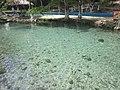 Alberca natural, El Palmar, Q. Roo - panoramio.jpg