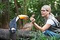 Alimentação de tucanos.jpg