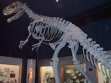 Fossiilit