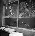 Amazonedroom oerwoud, Bestanddeelnr 906-1973.jpg