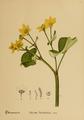 American Medicinal Plants-007-0051.png