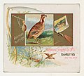 American Partridge, from the Game Birds series (N40) for Allen & Ginter Cigarettes MET DP839133.jpg
