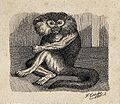 An ape sitting on the floor of its enclosure. Reproduction o Wellcome V0020785ET.jpg