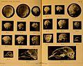 Anatomischer Anzeiger (1911) (18172027352).jpg