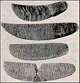 Ancient Egypt Medical tools3.jpg