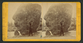 Ancient Glacier Boulders at Lake Tenaya, by Muybridge, Eadweard, 1830-1904.png